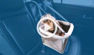 Como transportar animais no carro